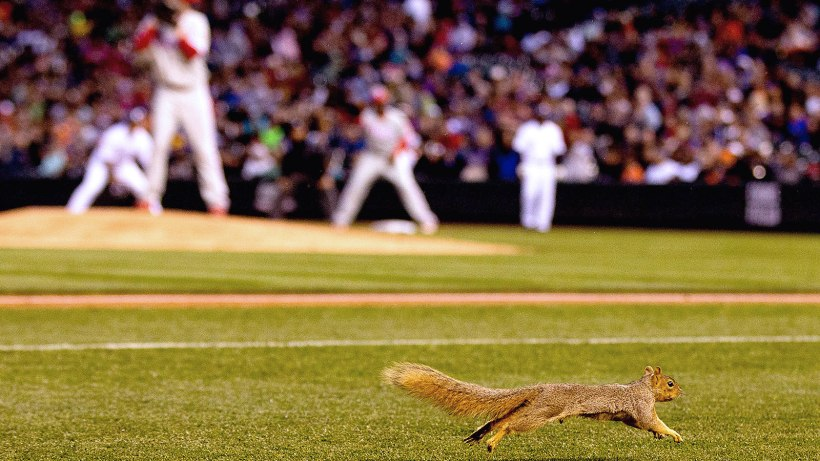 With Kendrick on the mound, here's the rodent in Colorado.